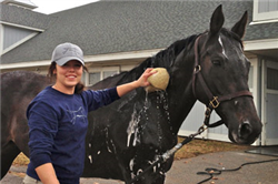 Agribusiness Major Interns for Kentucky Racehorse Industry